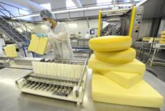Скачать бесплатно бизнес план производства сыра
