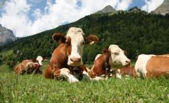 Животноводство как бизнес