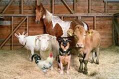 Каких животных выгодно разводить для бизнеса