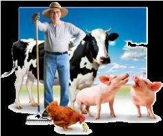 свой сельскохозяйственный бизнес