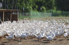 Скачать бесплатно бизнес план птицеводства
