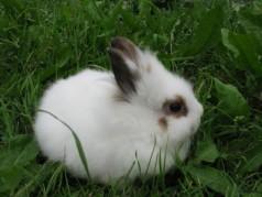 Скачать бесплатно бизнес план содержания и разведения кроликов