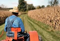 Грант на развитие фермерского хозяйства