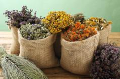 Выращивание лекарственных трав как бизнес
